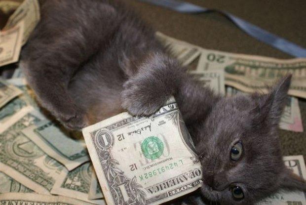 kitty_cash