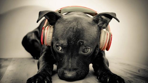 headphones-1