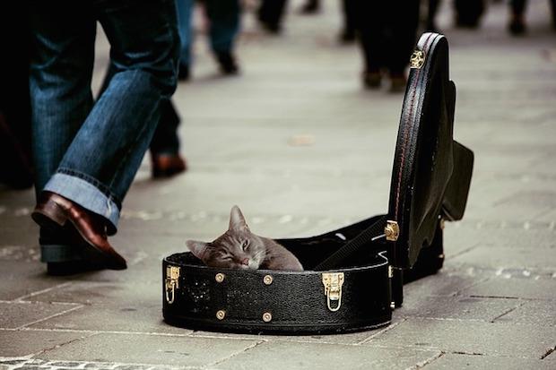 kitty-491013_640.jpg